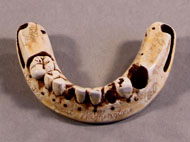 plaster-cast facsimile of George Washington's lower denture
