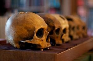 Row of plaster cast skulls