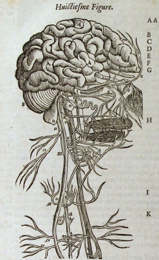 Ambroise Paré, The brain and nerves of the head and neck, p134, Les Oeuvres