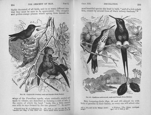 darwinbirds