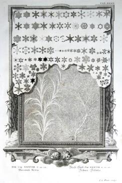 NYAMsacra7