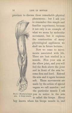 McKendrick_Motion_1892
