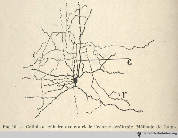 """A neuron with a short axon in the cerebral cortex. Golgi Method."" Figure 10 from Ramon y Cajal's Histologie du système nerveux de l'homme & des vertébrés. Copyright is owned by the family of Santiago Ramón y Cajal."
