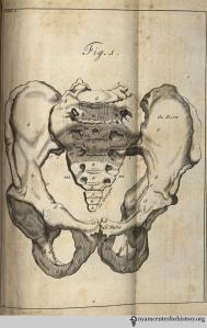 Figure 1: The pelvis.