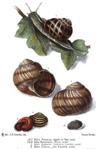 Caption: Lovell, M.S. The edible mollusks of Great Britain and Ireland, with recipes for cooking them. London: Reeve & Co, 1867.