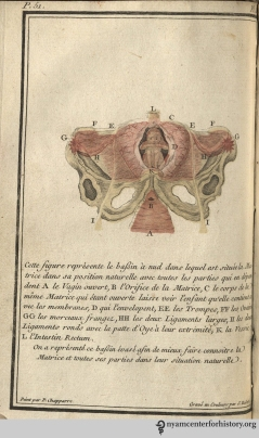Plate III: A fetus in its natural position.