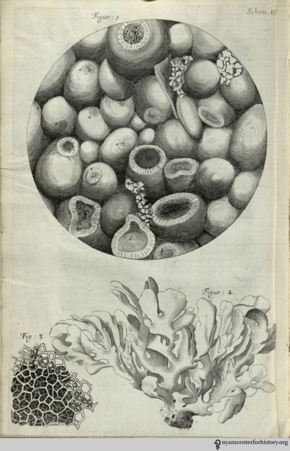 "Fig. 1 shows a microscopic view of kettering-stone. In observation XV, Hooke notes, ""We may here find a Stone by the help of a Microscope, to be made up of abundance of small Balls…and yet there being so many contacts, they make a firm hard mass…"""
