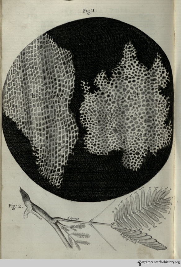 "In his observation on cork, Hooke compared its structure to that of honeycomb and. He discovered plant cells, ""which were indeed the first microscopical pores I ever saw, and perhaps that were ever seen…,"" and coined the term ""cell."""