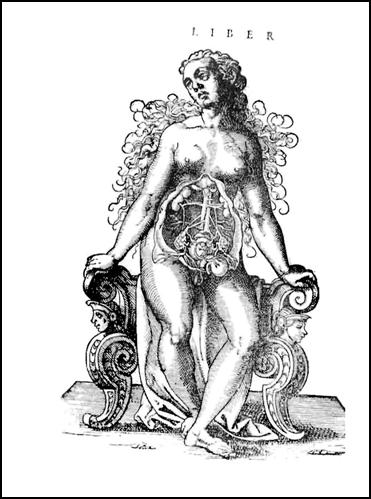 Naissance Macabre Birth Death And Female Anatomy Books Health