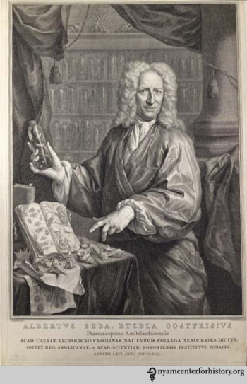Albertus Seba (1665–1736). Stipple by Jacobus Houbraken after a painting by J.M. Quinkhard. Seba was a Dutch pharmacist, zoologist, and collector of curiosities.