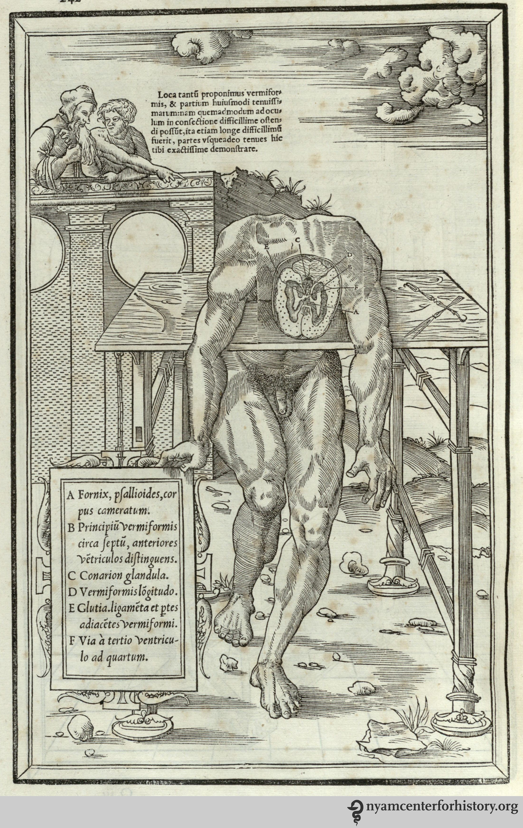Brains, Brawn, & Beauty: Andreas Vesalius and the Art of Anatomy ...