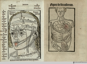 Magnus Hundt (1449-1519). Antropologium de hominis dignitate, natura, et proprietatibus: de elementis, partibus, et membris humani corporis… Leipzig: Wolfgang Stöckel, 1501. Magnus Hundt was a physician and theologian. His Antropologium, published in Leipzig in 1501, is a philosophical and religious work on the human body containing 17 anatomical woodcut illustrations. These are not the earliest anatomical illustrations, but they were the most detailed depiction of the organs created up to that point. The simple illustrations were intended as diagrams rather than realistic representations of the body and organs, and bones and muscles were not represented. The diagram of the head shows the three intellectual functions divided among three physical parts: common sense and imagination in the first, thought in the middle, and memory in the last.