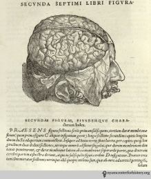 Andreas Vesalius (1514-1564). De humani corporis fabrica libri septum. Basel: Johannes Oporinus, 1543. The last section of the Fabrica is devoted to the brain, with illustrations more detailed than those in earlier works, such as Hundt and Dryander. Here, the dura mater has been peeled away, exposing the brain with its thin membrane and vessels.