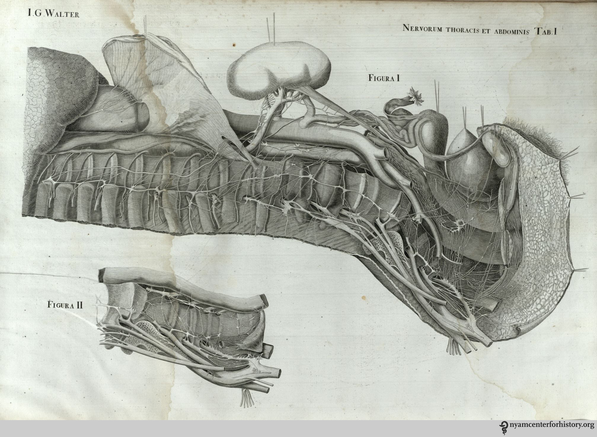 18th century anatomy | Books, Health and History