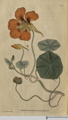 """Elizabeth Christina, one of the daughters of Linnaeus, is said to have perceived the flowers to emit spontaneously, at certain intervals, sparks like those of electricity, visible only in the dusk of the evening, and which ceased when total darkness came on."" (Plate 23, volume 1 reissue, 1793)"