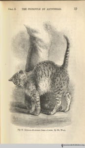 Darwin, Charles. The expression of the emotions in man and animals. London: J. Murray, 1872