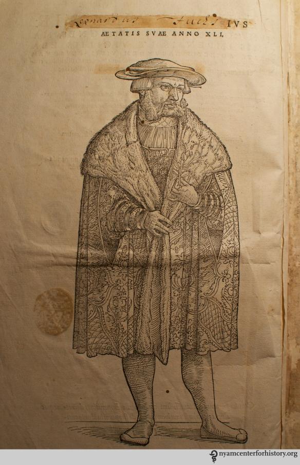 Fuchs, De historia stirpium commentarii insignes, 1542. Click to enlarge.