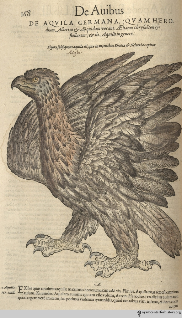 Eagle from Gesner's Historia Animalium, Liber III.