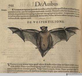 Bat from Gesner's Historia Animalium, Liber III.