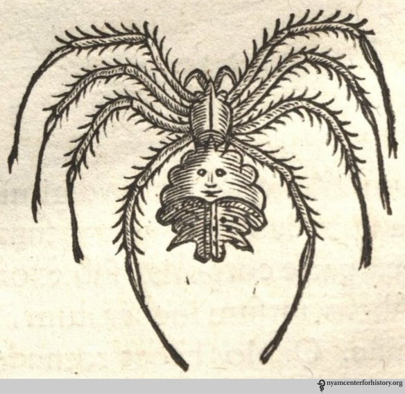 Spider on page 248 of Historia naturalis Brasiliae, 1648. Click to enlarge.