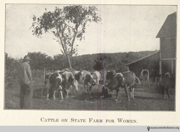 """Cattle on State Farm for Women."" In ""The Modern Way,"" 1913, page 20."