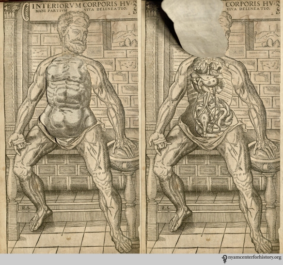 Male flap anatomy from The Academy's copy of the 1559 English edition of Geminus' Compendiosa.
