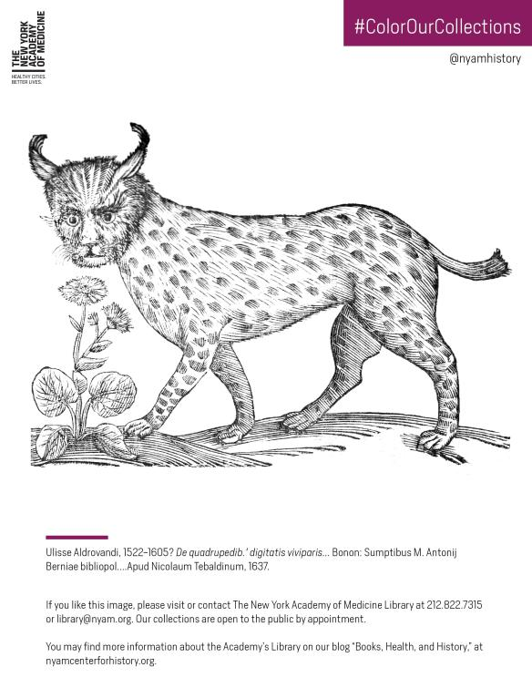 Lynx from Aldrovandi's De quadrupedib. digitatis viviparis, 1637. Click to download the PDF coloring sheet.