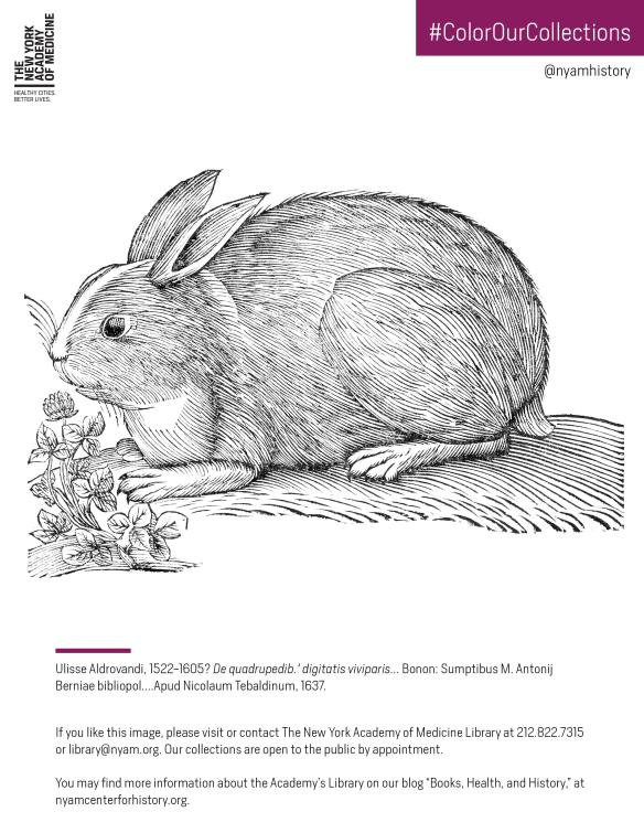 Rabbit in Ulisse Aldrovandi, De quadrupedib. digitatis viviparis, 1637. Click to download the PDF coloring sheet.