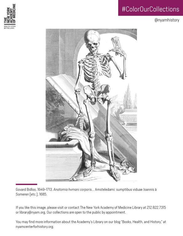 Skeleton in Bidloo's Anatomia hvmani corporis..., 1685.
