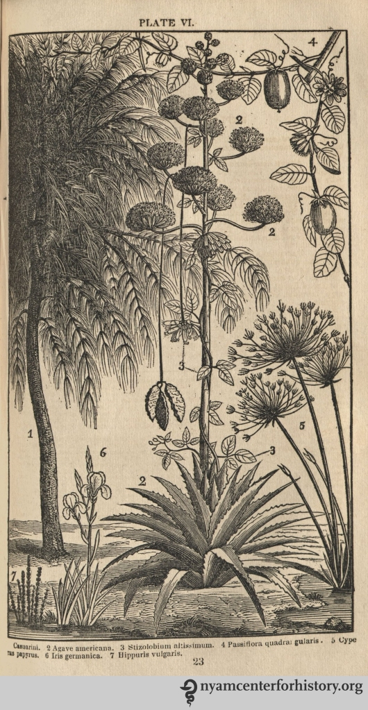 Plate VI from Phelps, Familiar Lectures on Botany, 1838. Click to enlarge.