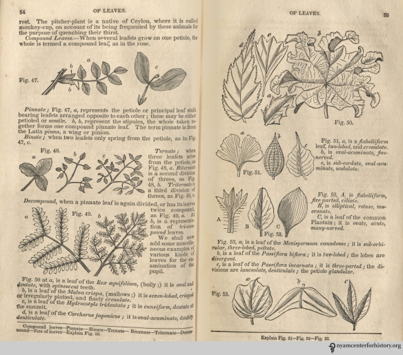 """Of leaves."" In Phelps' Familiar Lectures on Botany, 1838. Click to enlarge."