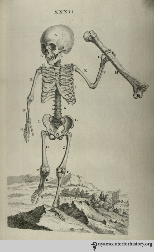 Plate XXXIII in Cheselden, Osteographia, 1733.