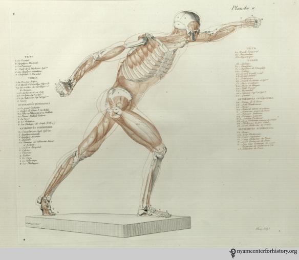 Planche 11 in Salvage, Anatomie du gladiateur combattant, 1812.