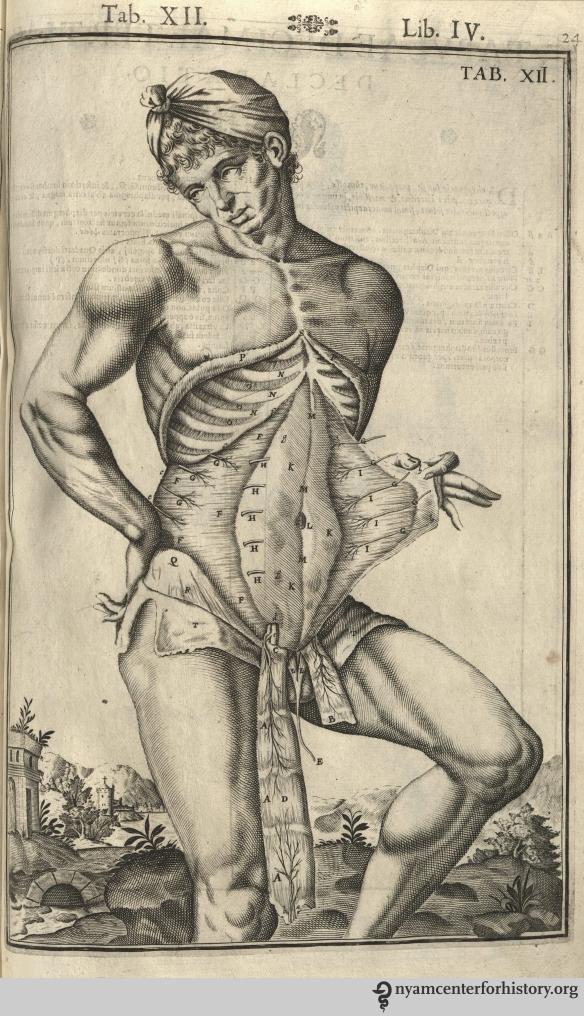 Tab. XII in Speigel, De humani corporis fabrica libri decem, 1627.