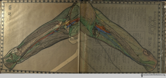 Forearm in Cheesman, Baillière's Synthetic anatomy, 1926-1936.