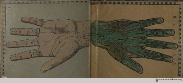 Hand in Cheesman, Baillière's Synthetic anatomy, 1926-1936.