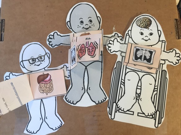 Make this flap anatomy craft with us at Museum Mile! Photo: Emily Miranker.