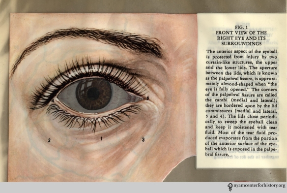 Figure I in Kronfeld, The Human Eye in Anatomical Transparencies, 1943. Click to enlarge.
