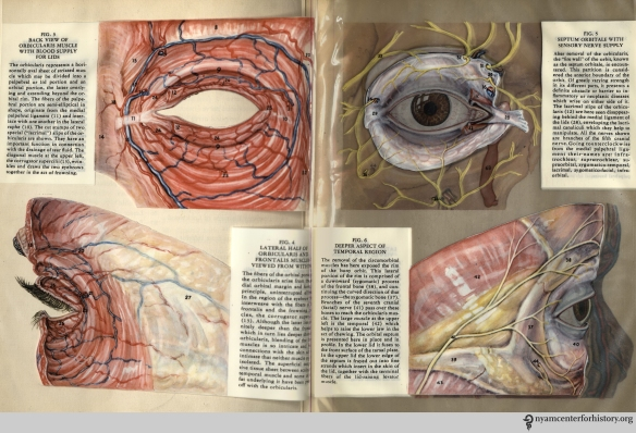 Figues 3-6 in Kronfeld, The Human Eye in Anatomical Transparencies, 1943. Click to enlarge.