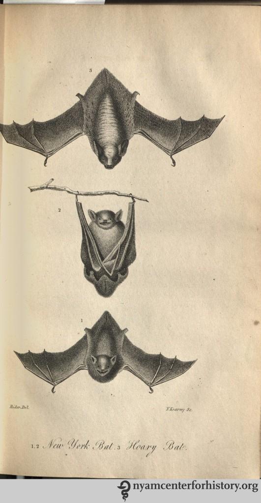 godman_americannaturalhistory_1826_v1_bats