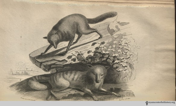 godman_americannaturalhistory_1826_v1_commonwolf_duskywolf_watermark