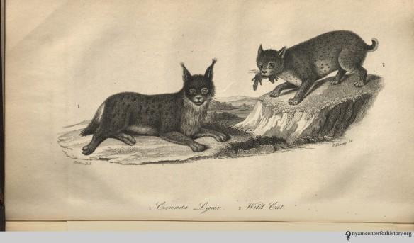 godman_americannaturalhistory_1826_v1_lynxandwildcat_watermark
