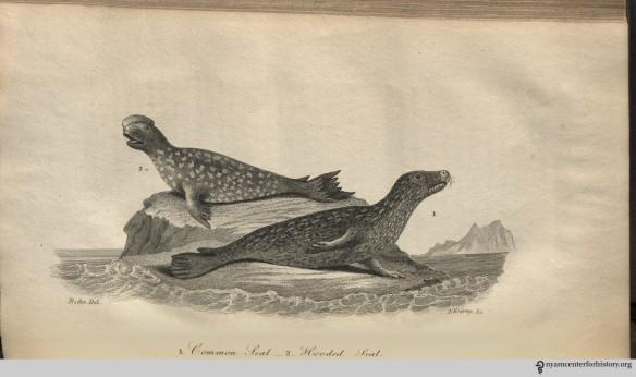 godman_americannaturalhistory_1826_v1_seals_watermark