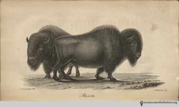 godman_americannaturalhistory_1828_v3_bison_watermark