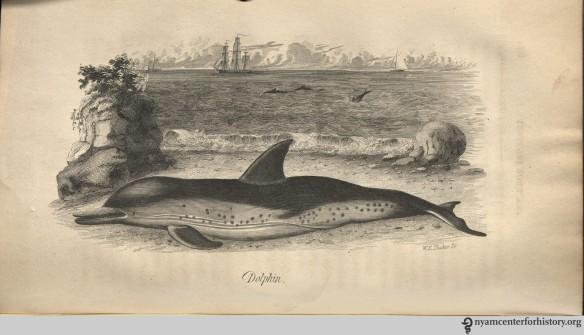 godman_americannaturalhistory_1828_v3_dolphin_watermark
