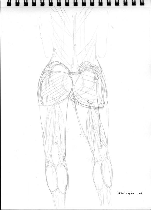 WhitTaylor2016anatomy2