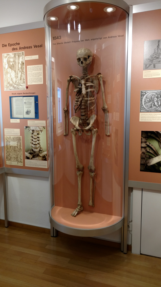 guerrini_skeleton