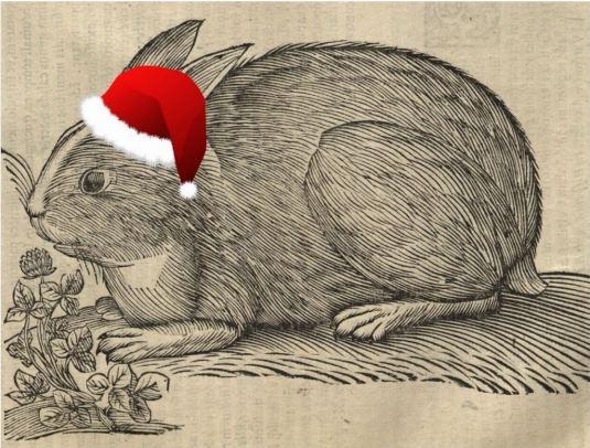 holiday-rabbit_aldrovandi
