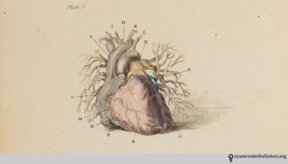 1bell_engravingsofthearteries_1801-plate1-crop_watermark