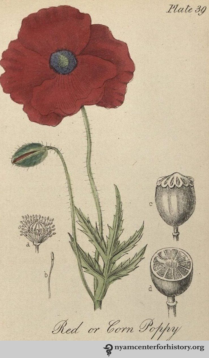Crimson In Memory Books Health And History